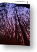 Mac Miller Greeting Cards - Sunset Forest Greeting Card by M K  Miller