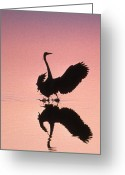 Nature And Wildlife Greeting Cards - Sunset Heron Greeting Card by Skip Willits