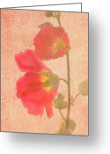 Hollyhock Greeting Cards - Sunset Hollyhocks Greeting Card by Diane Schuster