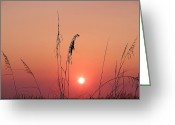Florida Sunset Greeting Cards - Sunset in Tall Grass Greeting Card by Bill Cannon