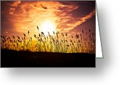 Alhaji Samura Greeting Cards - Sunset Inferno Greeting Card by Alhaji Samura