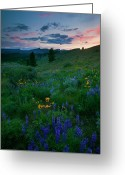 Balsamroot Greeting Cards - Sunset Meadow Trail Greeting Card by Mike  Dawson
