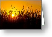 Goose Greeting Cards - Sunset Over The Prairie Greeting Card by Steve Gadomski