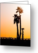 Summers Greeting Cards - Sunset Palms Greeting Card by Jim DeLillo