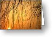 Winter Sleep Greeting Cards - Sunset Peers Through The Branches Greeting Card by Justin Guariglia