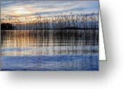 Quiver Greeting Cards - Sunset reed Greeting Card by Roman Rodionov