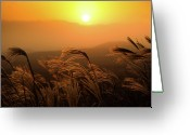 Swaying Greeting Cards - Sunset, Reeds And Wind Greeting Card by Douglas MacDonald