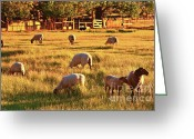 Sunset Scenes. Digital Art Greeting Cards - Sunset Sheep Ranch Greeting Card by Gus McCrea