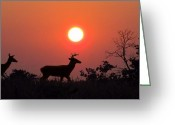 David Dehner Greeting Cards - Sunset Silhouette Greeting Card by David Dehner