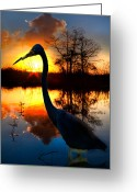 Red Bird Greeting Cards - Sunset Silhouette Greeting Card by Debra and Dave Vanderlaan