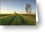 Prairie Greeting Cards - Sunset Greeting Card by Susan McDougall Photography