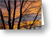 Sunset Posters Greeting Cards - Sunset Through the Tree Silhouette Greeting Card by James Bo Insogna
