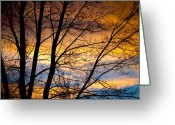 Sunset Posters Greeting Cards - Sunset Tree Silhouette Greeting Card by James Bo Insogna