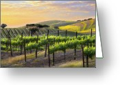 Vineyard Greeting Cards - Sunset Vineyard Greeting Card by Sharon Foster