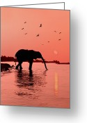 Safari Greeting Cards - Sunset with Elephant Greeting Card by Christian Heeb