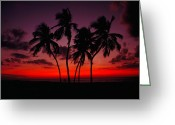 South Seas Greeting Cards - Sunset With Palm Trees At The South Greeting Card by Raymond Gehman