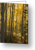 Yellow Trees Greeting Cards - Sunshine Grove Greeting Card by Dana Kern