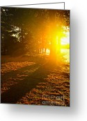 Dusk Greeting Cards - Sunshine in evening forest near lake Greeting Card by Elena Elisseeva