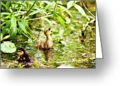 Duckling Greeting Cards - Supper Time Greeting Card by Scott Pellegrin