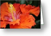 Hawaiian Art Digital Art Greeting Cards - Surrender Greeting Card by Sharon Mau