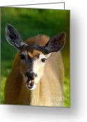 Janie Greeting Cards - Survival of Innocence Greeting Card by Janie Johnson
