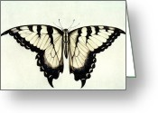 White Wing Greeting Cards - Swallow-tail Butterfly Greeting Card by Granger