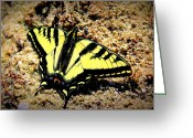 Swallow Tail Butterfly Greeting Cards - Swallow Tail Greeting Card by Donna Duckworth