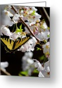 Time Framed Prints Photo Greeting Cards - Swallowtail Greeting Card by Nathan Grisham