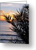 Beach Photograph Photo Greeting Cards - Swamis Palm Greeting Card by Kelly Wade