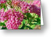 Swamp Milkweed Greeting Cards - Swamp Bee Greeting Card by Whispering Feather Gallery