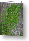 Palm Leaf Greeting Cards - Swamp Fern Greeting Card by Juergen Roth