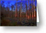 The Swamp Greeting Cards - Swamp in Cypress Gardens Greeting Card by Susanne Van Hulst