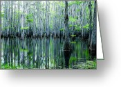 Cajun Greeting Cards - Swamp in Louisiana Greeting Card by Ester  Rogers