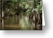 Florida Swamp Greeting Cards - Swamp Road Greeting Card by Joseph G Holland