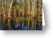The Swamp Greeting Cards - Swamp Trees Greeting Card by Susanne Van Hulst