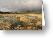 Stormy Skies Greeting Cards - Swampland Greeting Card by Robert Lacy