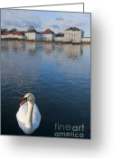 Nymphenburg Greeting Cards - Swan at the palace Greeting Card by Andrew  Michael
