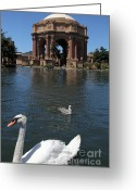 Seagull Photo Greeting Cards - Swan at The San Francisco Palace of Fine Arts - 5D18076 Greeting Card by Wingsdomain Art and Photography