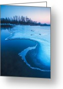 Dusk Greeting Cards - Swan Greeting Card by Davorin Mance