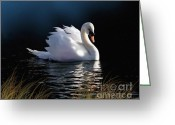 Lily Pad Greeting Cards - Swan Elegance Greeting Card by Robert Foster
