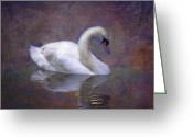 Ireland Greeting Cards - Swan in Pond Greeting Card by Mark Richards