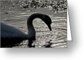 Drinking Water Greeting Cards - Swan Silhouette Greeting Card by Odd Jeppesen