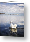 Clear Glass Greeting Cards - Swan Song Greeting Card by Vicki Jauron