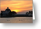 Morn Greeting Cards - Swans at Sunrise  Greeting Card by Bill Cannon