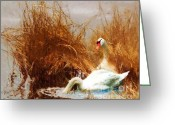 Sportsmen Greeting Cards - Swans at the Shore Greeting Card by Pg Reproductions