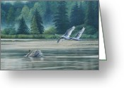 Ruth Gee Greeting Cards - Swans on Carter Lake Greeting Card by Ruth Gee