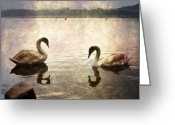 Sea Bird Greeting Cards - swans on Lake Varese in Italy Greeting Card by Joana Kruse