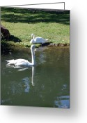 Noth Greeting Cards - Swans Greeting Card by Thea Gilliam