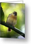 Little Bird Greeting Cards - Sweet Bird on Branch Greeting Card by Carol Groenen