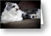 Dogs Digital Art Greeting Cards - Sweet couple Greeting Card by Gun Legler